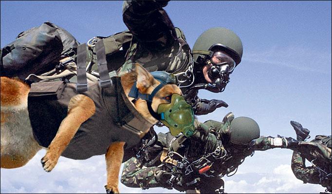 navy dog handlers